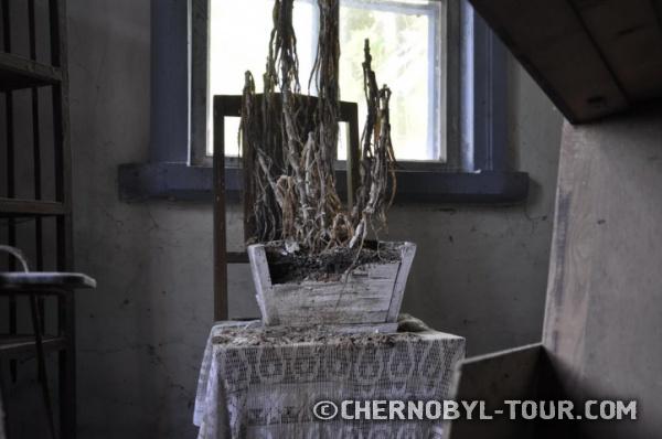 Растение, оставленное при эвакуации в с. Лелёв